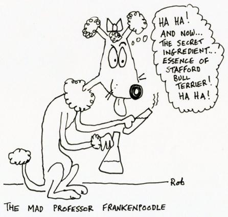 191014frankenpoodle (800x764)